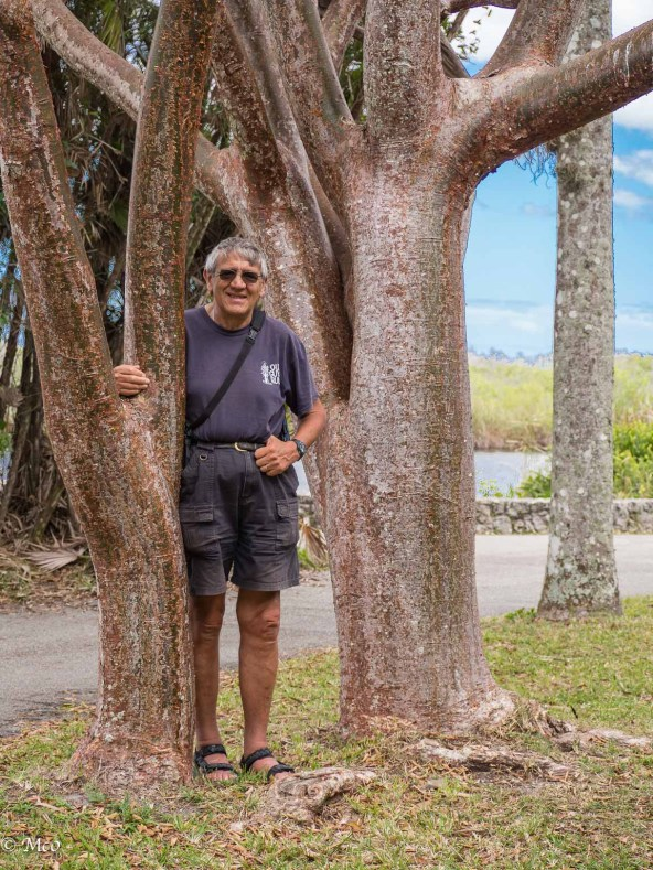 Colin next to a Gumbo Limbo tree at the start of the Gumbo Limbo trail