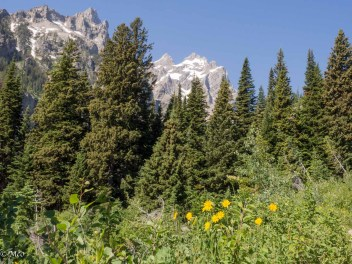 Up the Cascade Canyon Trail