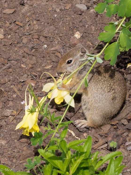 This Chipmunk appreciated the flowers, too