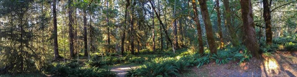 Campsite at Hoh Rainforest