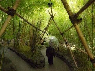 Walking among bamboo