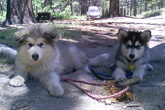 Mya and Merlin