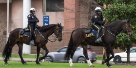 N.O. Police Transport