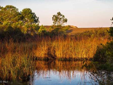 Dawn Reeds