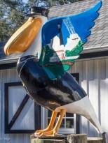 Coastguard Pelican