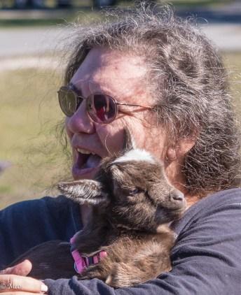 Baby Pigmy Goat, Pensacola, FL
