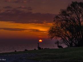 Lake Ontario, NY