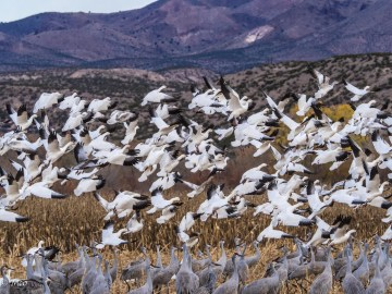 Bosque Del Apache Wildlife Reserve, NM