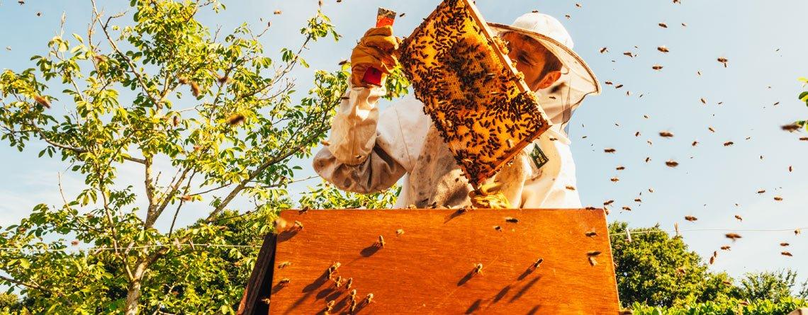 Bee Colony Collapse