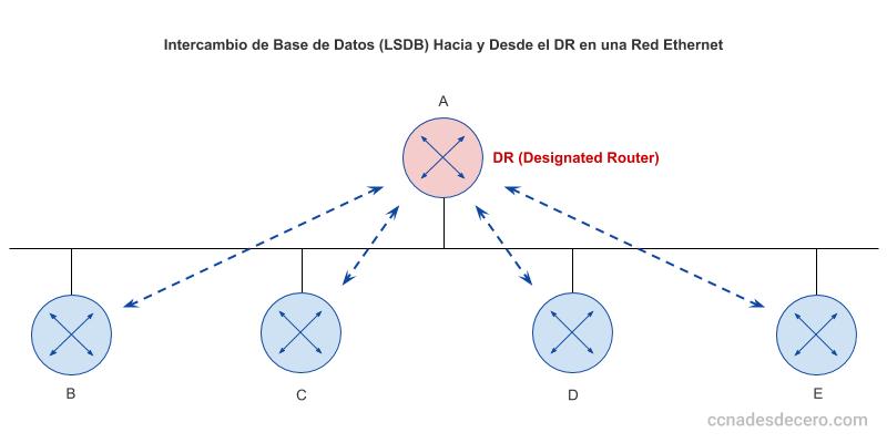 Intercambio LSDB en el Designated Router