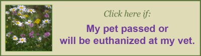 My pet has died or will be euthanized at the vet, Chartiers Custom Pet Cremation
