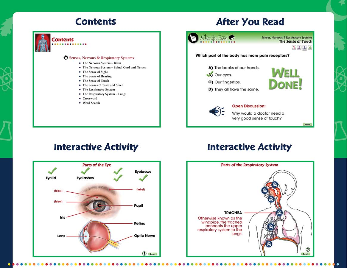 Senses Nervous Amp Respiratory Systems