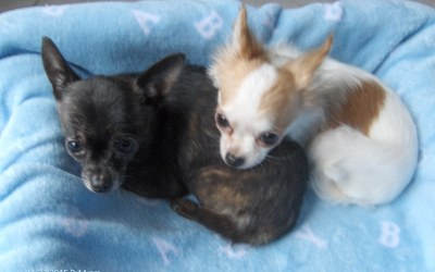 Beautiful Baby and Bentley (bonded pair)