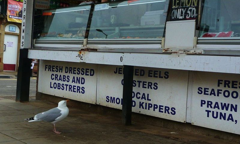 Seagull looking at a fish stand