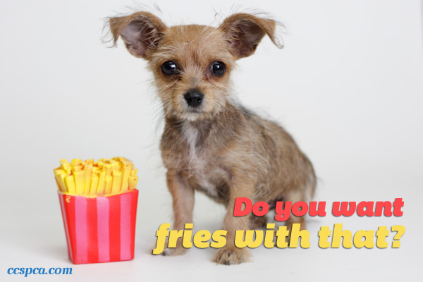 Cute Puppy Caption Fries With That Central California SPCA Fresno CA