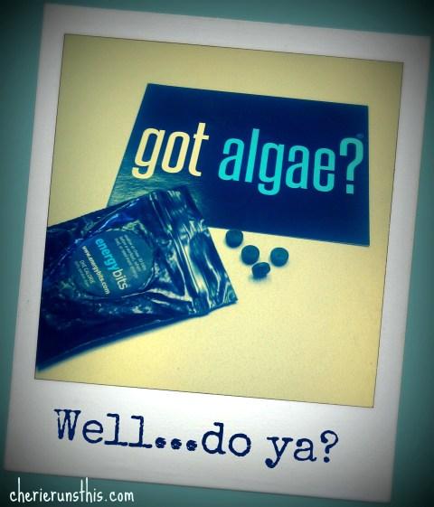 algae spirulina