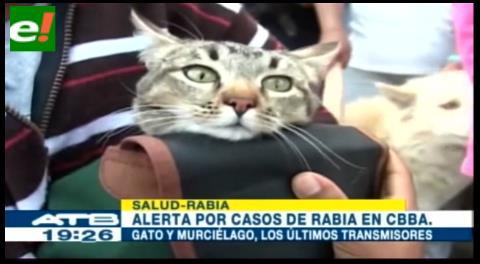 Alerta por casos de rabia de gato y murciélago en Cochabamba