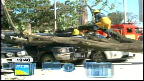 Santa Cruz: Un árbol cayó encima de cuatro vehículos