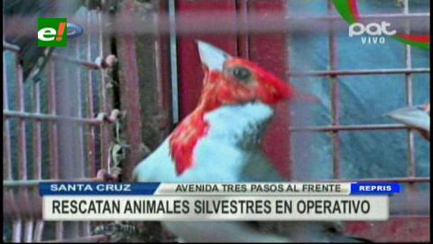 Operativo: Gobernación rescata animales silvestres en los mercados