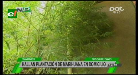 Hallan marihuana en casa de un sujeto denunciado por su pareja