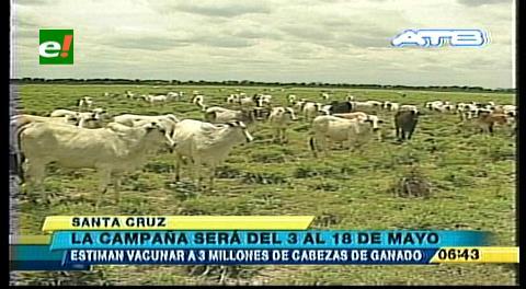 Lucha contra la aftosa: Inicia la vacunación de 5,7 millones de bovinos