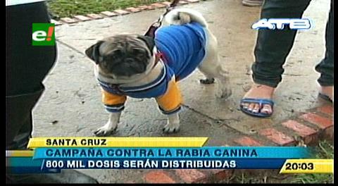 Santa Cruz: Arrancó campaña para vacunar a 800.000 mascotas contra la rabia