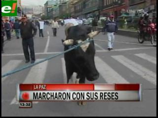 Vacas y toros colapsan la sede de Gobierno