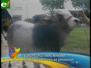 La biotecnología bovina se apodera de Agropecruz