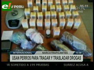 Narcos usaban perros para trasladar droga de México a Italia