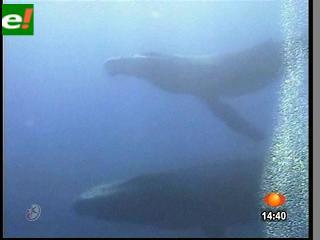 Ciclo de apareamiento de las Ballenas comienza en las aguas de Baja California