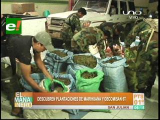 Umopar encuentra plantaciones de marihuana en San Julián