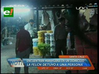 Santa Cruz: Policía incauta de más 500 kg de marihuana, hay un detenido
