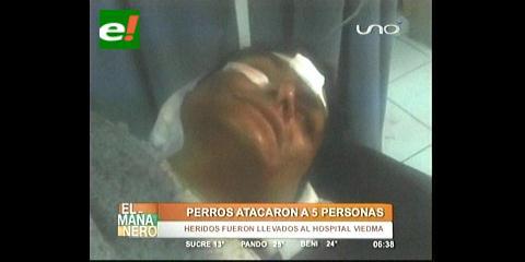 Cochabamba: Una jauría de perros ataca y hiere a seis personas en Tiquipaya