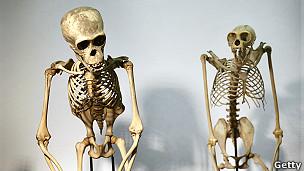 El virus que provoca el Sida sería más antiguo de lo que se cree: científicos creen que estaba presente hace 16 millones de años.