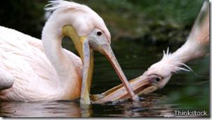 Humanos y animales no sobrevivirían siendo egoístas en un entorno cooperativo, dicen los científicos.
