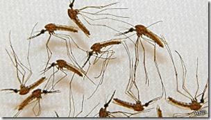 La vacuna PfSPZ contiene parásitos vivos pero debilitados extraídos de los zancudos.