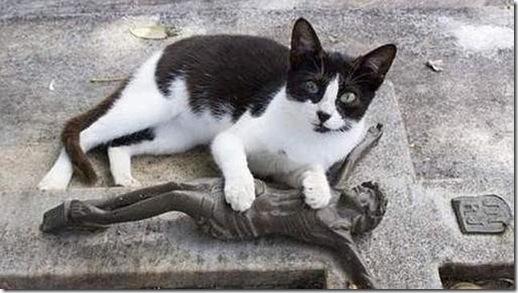 gato-visita-tumba--644x362