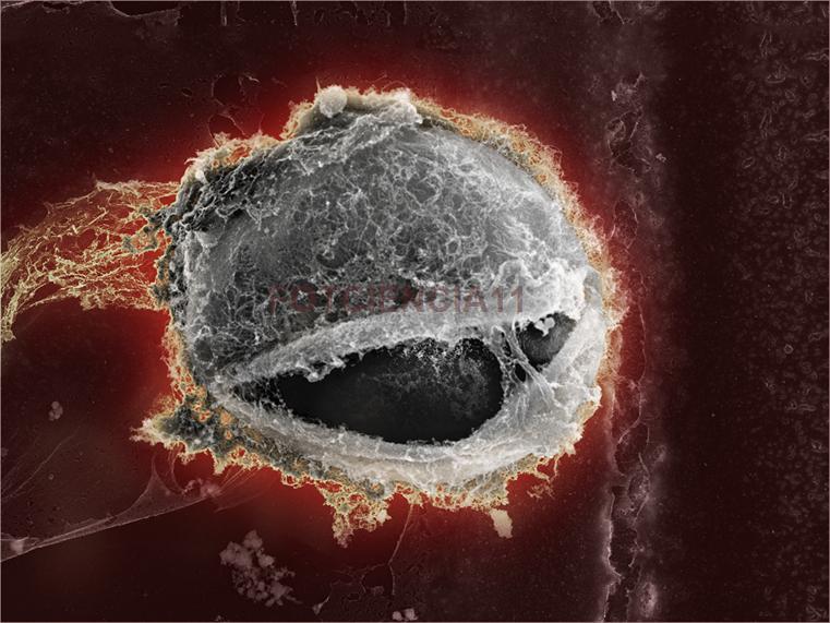 mejores imágenes científicas