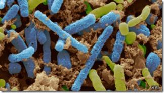 Acetobacterias presentes en la fermentación forman el ácido orgánico que llamamos vinagre.
