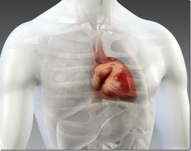 membrana.corazon.1