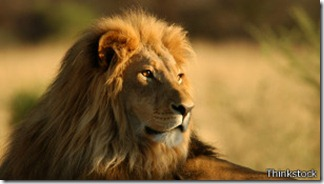 La historia del león moderno se remonta a unos 124.000 años.