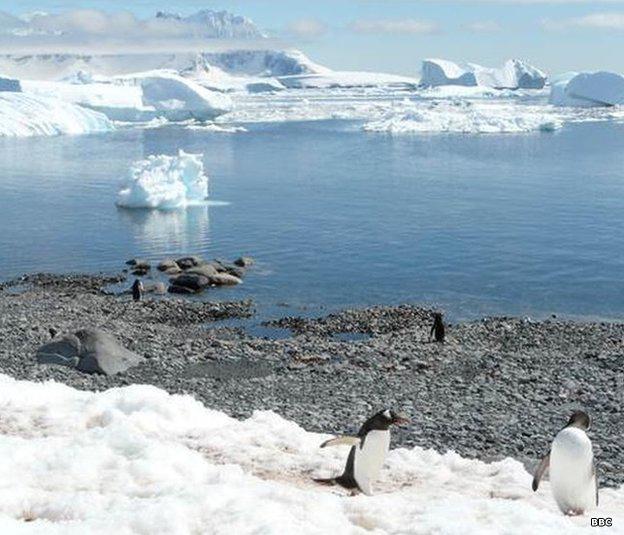 Pingüinos en el Polo