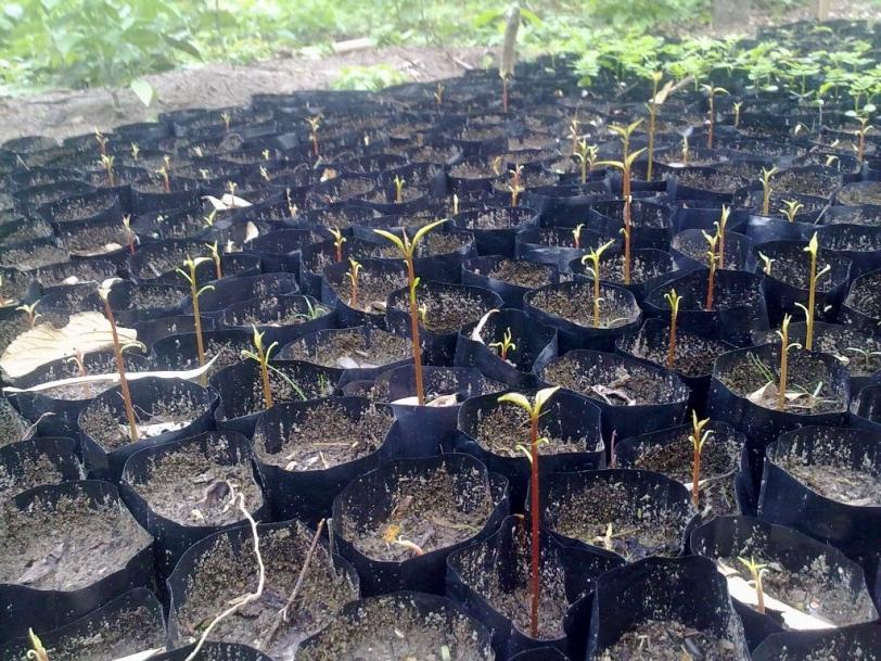 Zonas degradadas a causa de los chaqueos y desmontes serán reforestadas