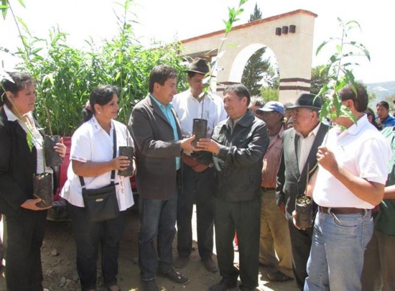 Fruticultores de Guadalupe reciben plantines mejorados