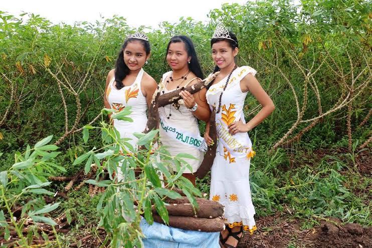 """La producción de yuca mejora en la comunidad de """"Los Tajibos"""""""