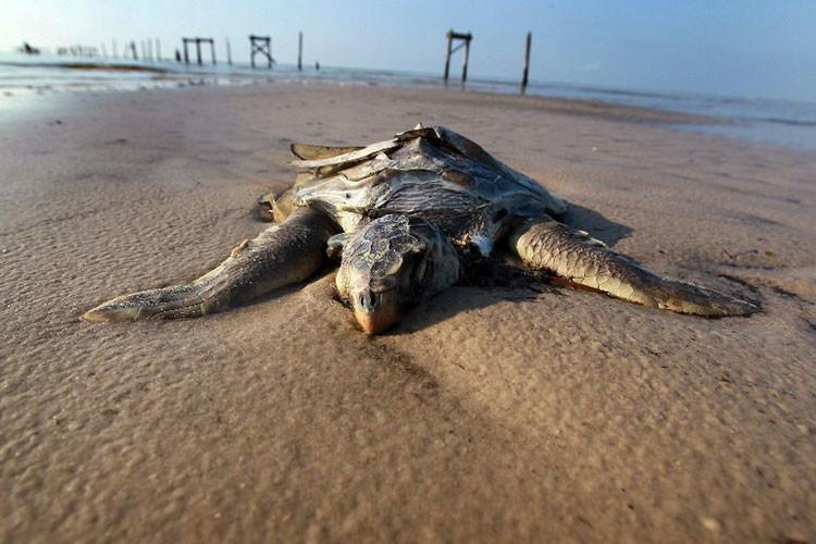 Petroleo Golfo de México