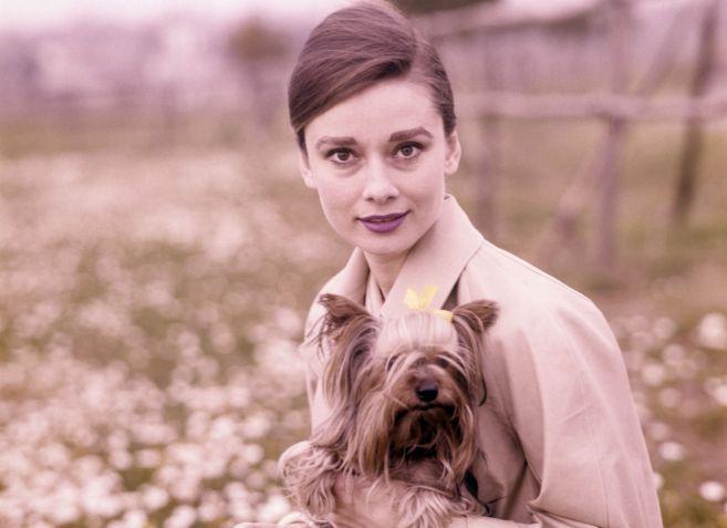 La actriz Audrey Hepburn, en una imagen de 1960 en la que posa con su...