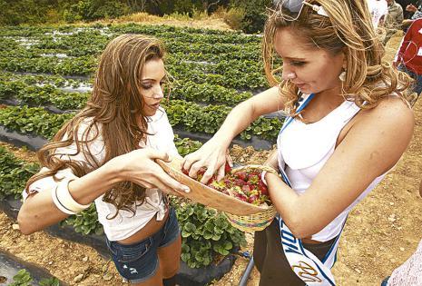 En una de sus visitas a las parcelas al sureste del municipio, la miss Bolivia Mundo 2014, Andrea Forfori, con la picardía que la caracteriza, cargó  su canasto en complicidad con Paula Schneider.