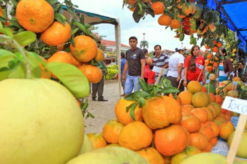 La naranja lidera producción de cítricos en Bolivia – eju.tv