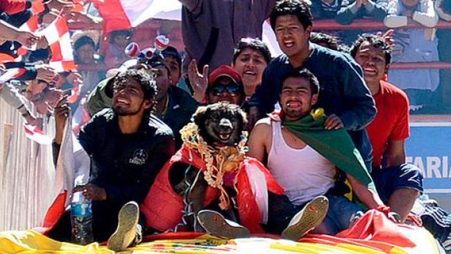 El can, bautizado como Petardo, se unió a las movilizaciones en Potosí.